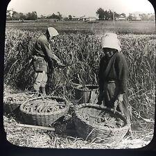 Antique Magic Lantern Glass Slide Photo Japan Peasants Culling Millet Baskets