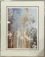 Paula Crane Sanctuary Signed Numbered Framed Wood Block Art Print Birch 74/300