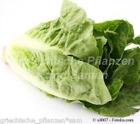 🔥  Romana Salat grün Römersalat Bindesalat zart 100 Samen  für Balkon und Kübel