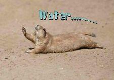 Magnet Animals Funny Prairie Dog Thirst Thirsty Crawl Water Drink
