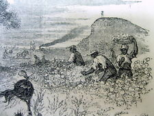<1855 newspaper with front page STATE of GEORGIA ENGRAVING Slaves Picking Cotton