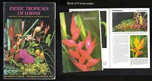 Exotic Tropicals of Hawaii, Angela K. Kepler, Paperback, 1996, 112 pages