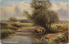 Artist Drawn, Cattle, On the Old Lea, CHINGFORD, London