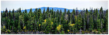 "HO Scenery Background Forest 12"" high x 36"" wide poly media"