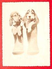 """HUMOUR PHOTO """" CHIENS DOGS DANS PAIRE DE BOTTES BOOTS """""""