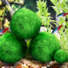 3-4cm Moss Ball Cladophora Live Plant Fish Tank Aquarium Decor Marimo Hot