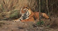 """Huge art Oil painting Wild animal yellow tiger - The watchful tiger canvas 36"""""""