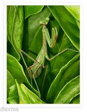 © ART Praying Mantis Realism Insect Bug Original Illustration Artist print by Di