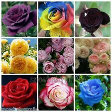 24Kinds Rose Seeds Shrub Hardy Bush Climbing Rosa Multiflora Climber Flower Rare