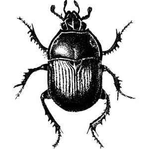 'Beetle' Unmounted Rubber Stamp (RS026347)