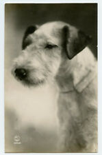 1920s Mutts Pooch TERRIER DOG French photo postcard