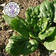 MR fothergills-pacchetto pittorico-verdura-spinacio Cello F1-300 Semi