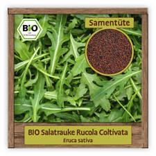 Rauke Samen winterhart BIO Kräutersamen Saatgut Eruca sativa 250 Pflanzen