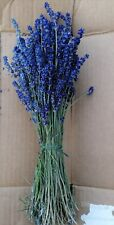 Bunch of Dried Natural Blue LAVENDER.