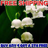 LILY OF THE VALLEY Diffuser Fragrance Oil Refill VEGAN & CRUELTY FREE