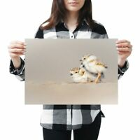 A3 - Piping Plover Chicks Bird Poster 42X29.7cm280gsm #12650