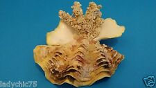 CORAL AND SHELL FROM THE REDSEA ISRAEL