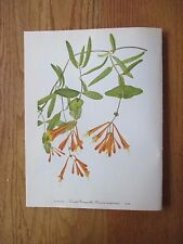 Set of 12 Walcott Wildflower Prints - Sunflower Honeysuckle Valerian Yarrow 12/1
