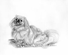 Blonde Pekingese Dog B/W 8�x10� Print from Pencil Drawing by P. Tarlow