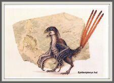 DINOSAUR Scansoriopterygidae CHINA Hebei 辽宁 Liaoning 河北 Prehistoric BIRD card #4
