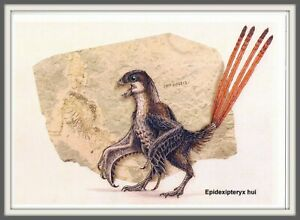DINOSAUR Scansoriopterygidae CHINA Hebei 辽宁 Liaoning 河北 Prehistoric BIRD card #4