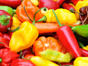 """Chilli Seeds """"Mixed"""" (Approx 30 Seeds) Excellent Mixture Of Chillies...."""