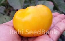 Yellow Grosse Lisse Tomato - 10 Seeds!!!