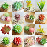 Artificial Succulents Plant Garden Miniature Fake Cactus Cute Home Floral Decor