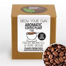 Plants From Seed - Grow Your Own Aromatic Arabica Coffee Plant Kit