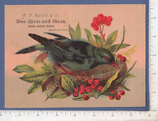 9917 W. P. Marsh shoes Blackbird in nest trade card Opera House, Springfield, MA