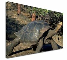 More details for giant galapagos tortoise x-large 30