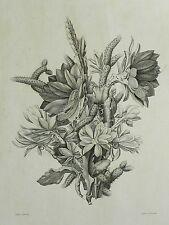 Christian Gottfried Zschoch - KAKTUSBLÜTEN Cactus Blüthen - Radierung 1829