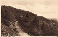EARLY 1900's VINTAGE POSTCARD - JUBILEE DRIVE, PINE WOOD, GT MALVERN POSTCARD