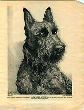 1930 Book Plate Print Dog Pekingese Nina Scott Langley Scottish Terrier Sketch