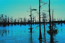 BLUE BAYOU  ,photography,decor,art,original,Louisiana,images,