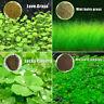 Pflanze Kerne Wasser Wasser Gras Deko Aquarium Garten Landschaft Pflanzen