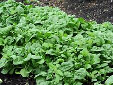 Spinach, GIANT NOBLE, 1100 Heirloom, Non-gmo, gluten free Seeds -FREE SHIPPING