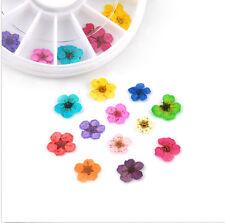 24 PCS Dried Flower UV Gel Nail Decor Fashion Design Tips DIY Art Acrylic