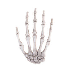 Skeleton Skull Claw Hand Bone Halloween Party Carnival Home Decor  _C