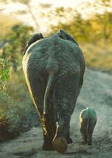 African Elephant and Calf - 3D Lenticular Postcard Greeting Card - Wild Animals