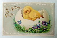 1910  EASTER POSTCARD YELLOW BABY CHICK IN CRACKED EGG PURPLE FLOWERS #523d
