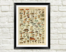 MUSHROOMS PRINT: Traditional Fungi Types Illustration
