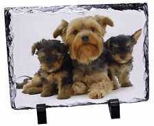 Yorkshire Terrier Dog Photo Slate Christmas Gift Ornament AD-Y10SL