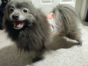 """""""Cumber-Blunder"""" Belly Band for Male Dogs - Colorful Donuts - S"""