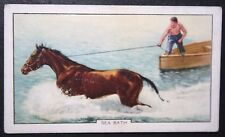 Seaford  East Sussex    Race Horse Sea Bathing   Vintage Card  # VGC