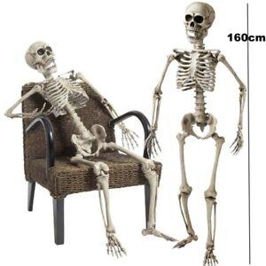 Skelett lebensgroß 160 cm beweglich / Lehrmodell / Anatomie Halloween Party #515