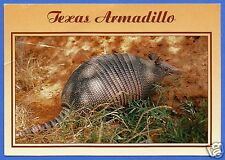 TEXAS ARMADILLO POSTCARD