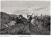 Roma:Campagna Romana:Buoi e Bovari.Butteri.Veduta Pittoresca + Passepartout.1876