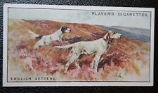 English Setters on Grouse Moor      Original Vintage Card  # VGC