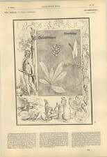 1863 Albrecht Durer Arabesques Hercules Fantastic Duck Drunkard Herbarium Artwor